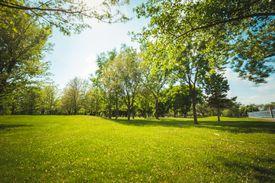 Trees in a grassy field