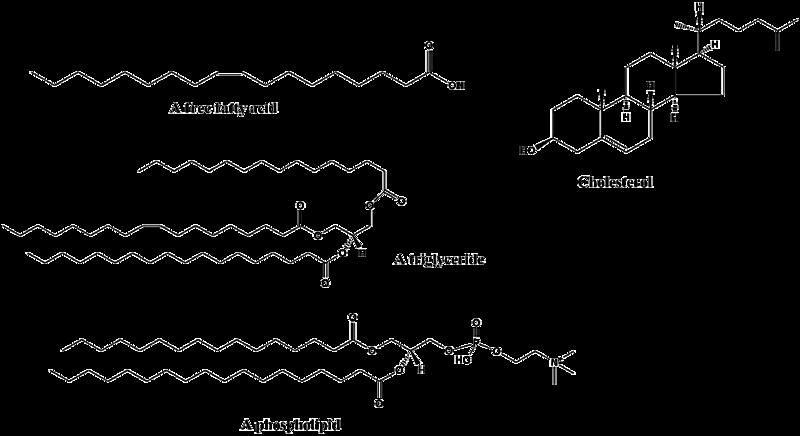 Examples of common lipids.