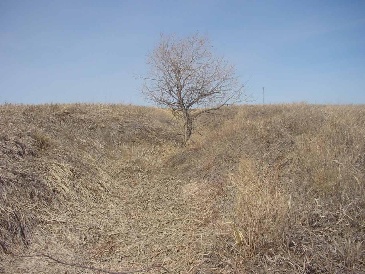 Tree still dormant in early spring