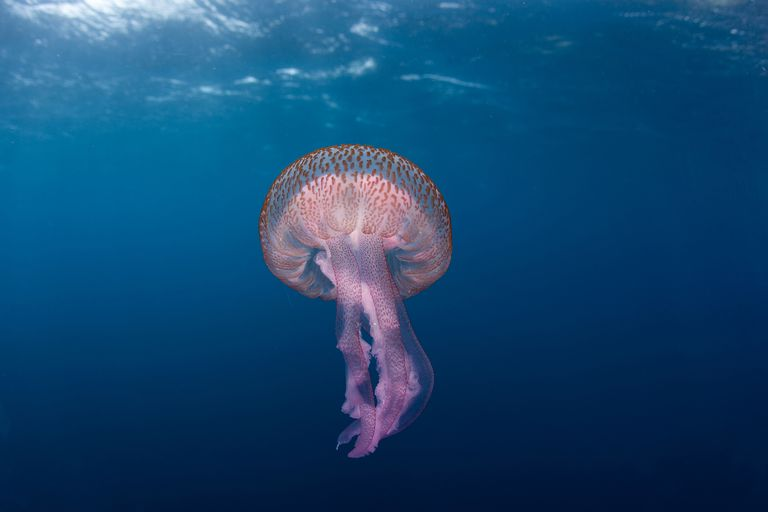 Jellyfish floating in the water