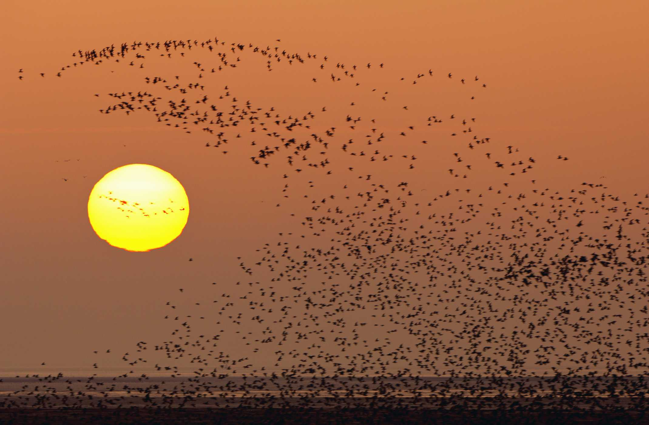 Birds that migrate can change up their gene pool