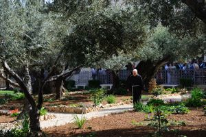 Garden of Gethsemane, Church of All Nations, Jerusalem