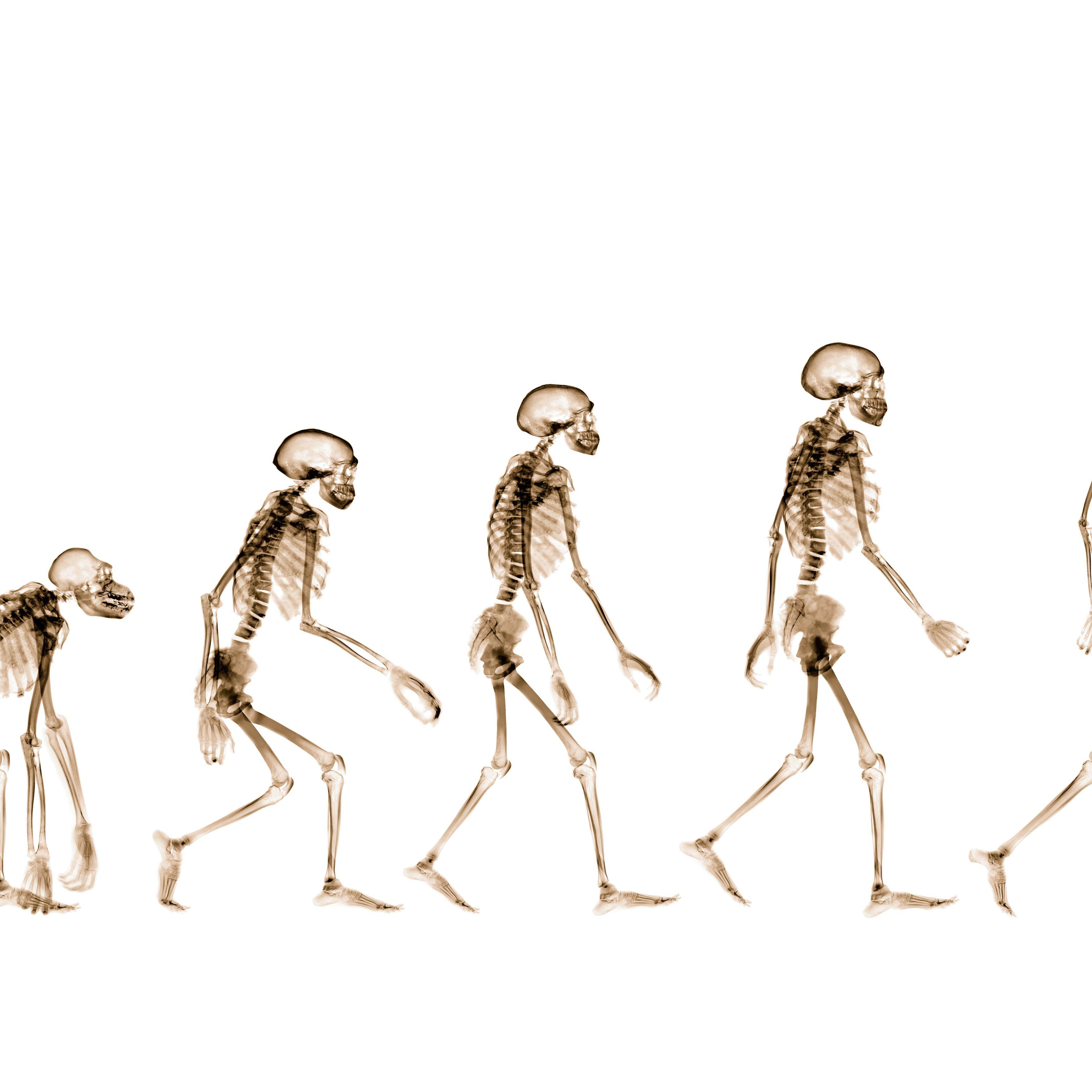 Anatomy Evolution And Homologous Structures