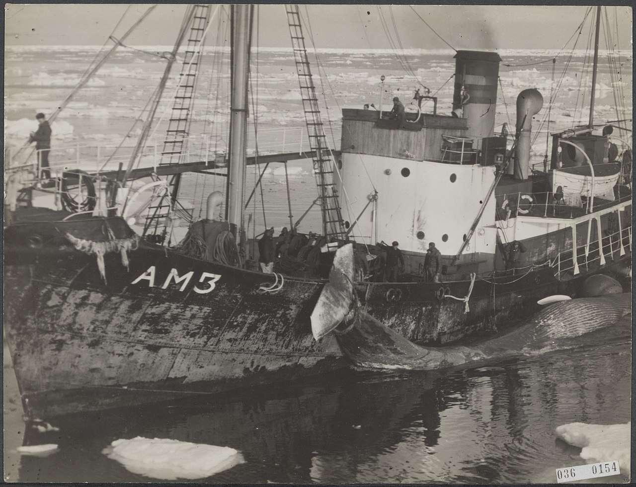 Whaling ship, 1947