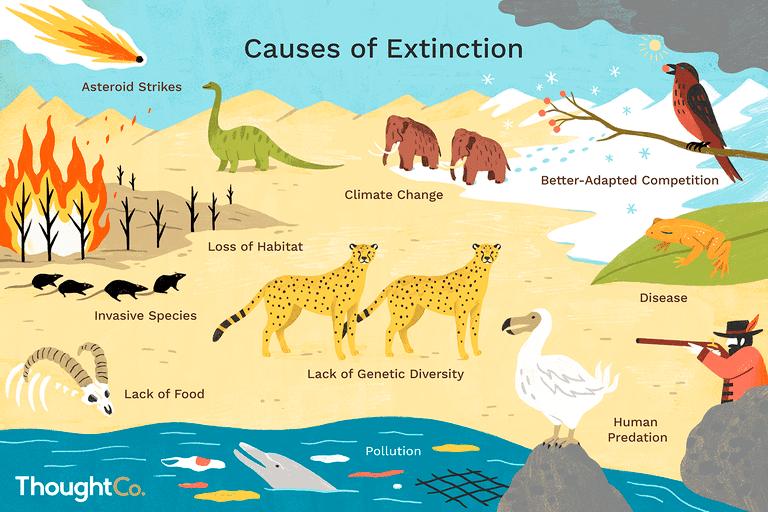reasons animals go extinct final2 d89c006ce17e c5d9dc63c8effd