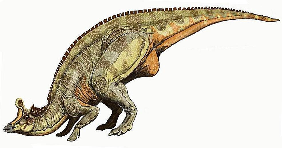 lambeosaurus tail
