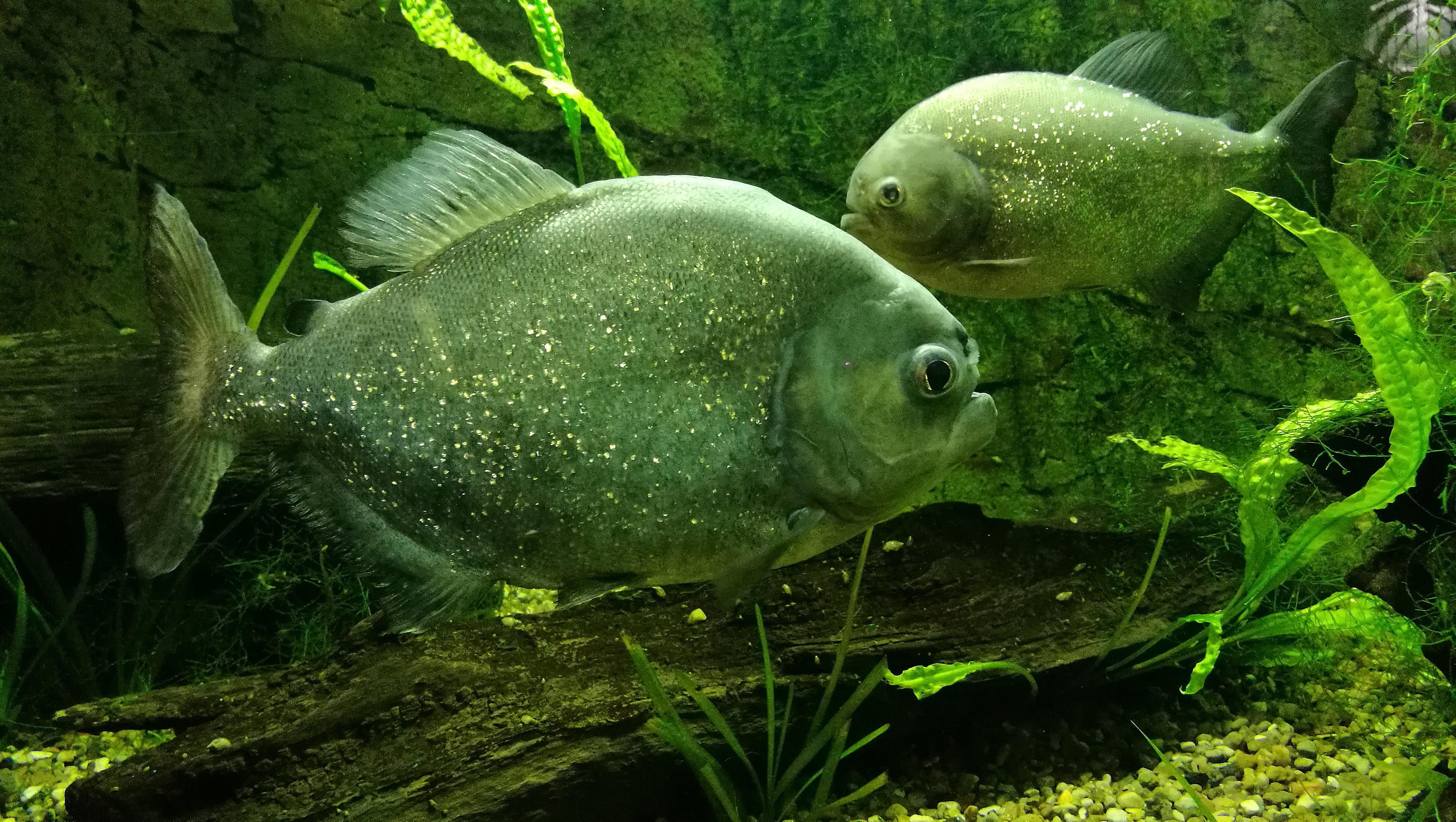 10 Unique Animals Of The Amazon River Basin