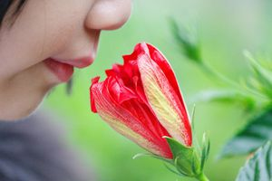 girl smelling a flower
