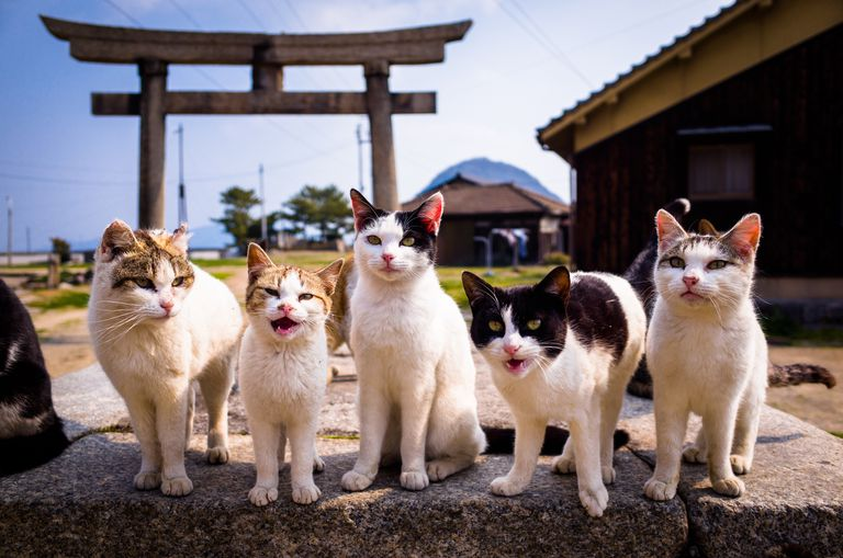 Cats on Sanagi Island in Kagawa, Japan with traditional architecture in the background.