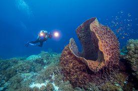 Barrel Sponge - Parazoa