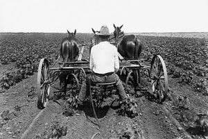 farmer plowing ground with two mules