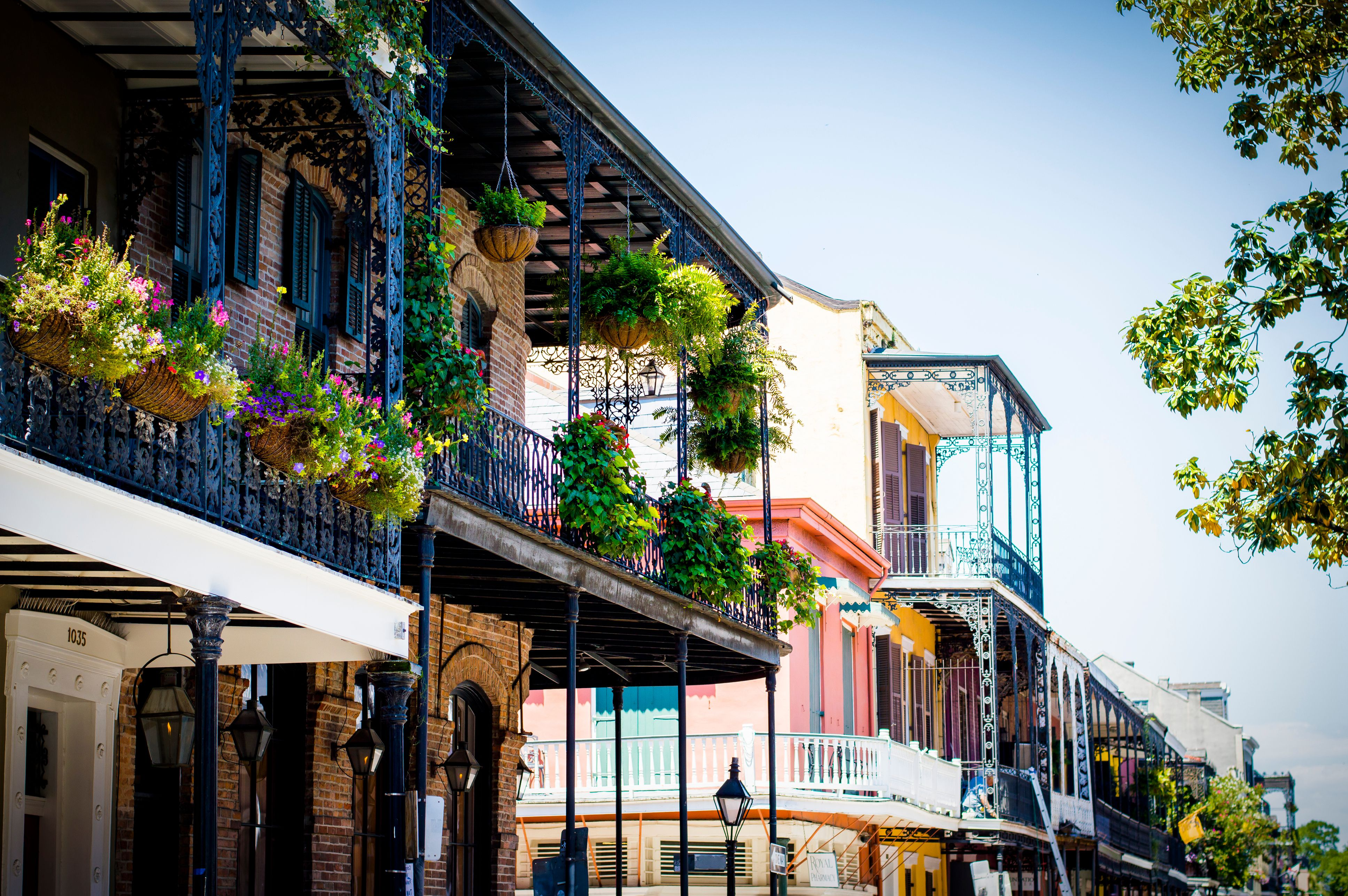 French Quarter Potted-plants-in-balcony-of-building-at-french-quarter-629129963-5ad6af01119fa8003654e5f7