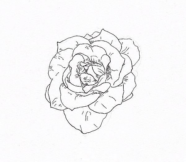 draw a rose with fiber tip pen