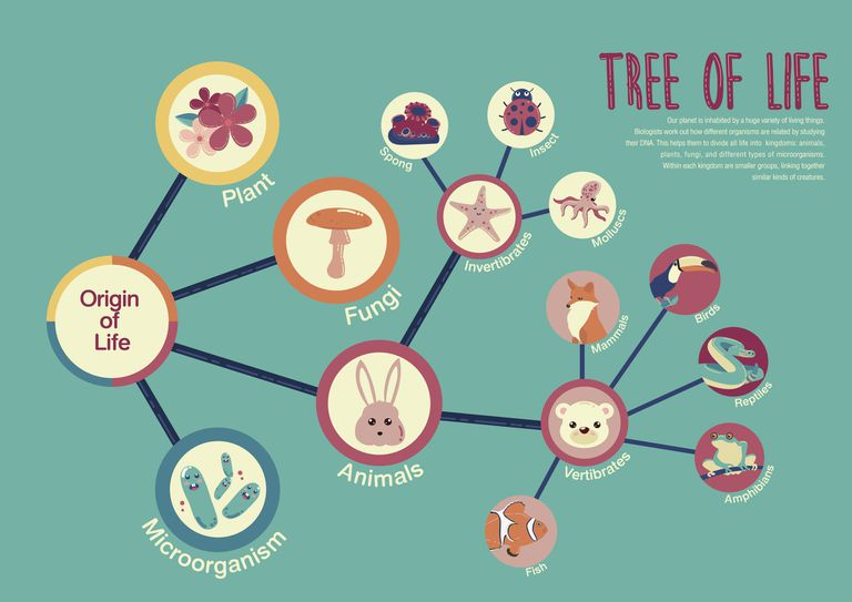 The Coalescent Theory and Evolution