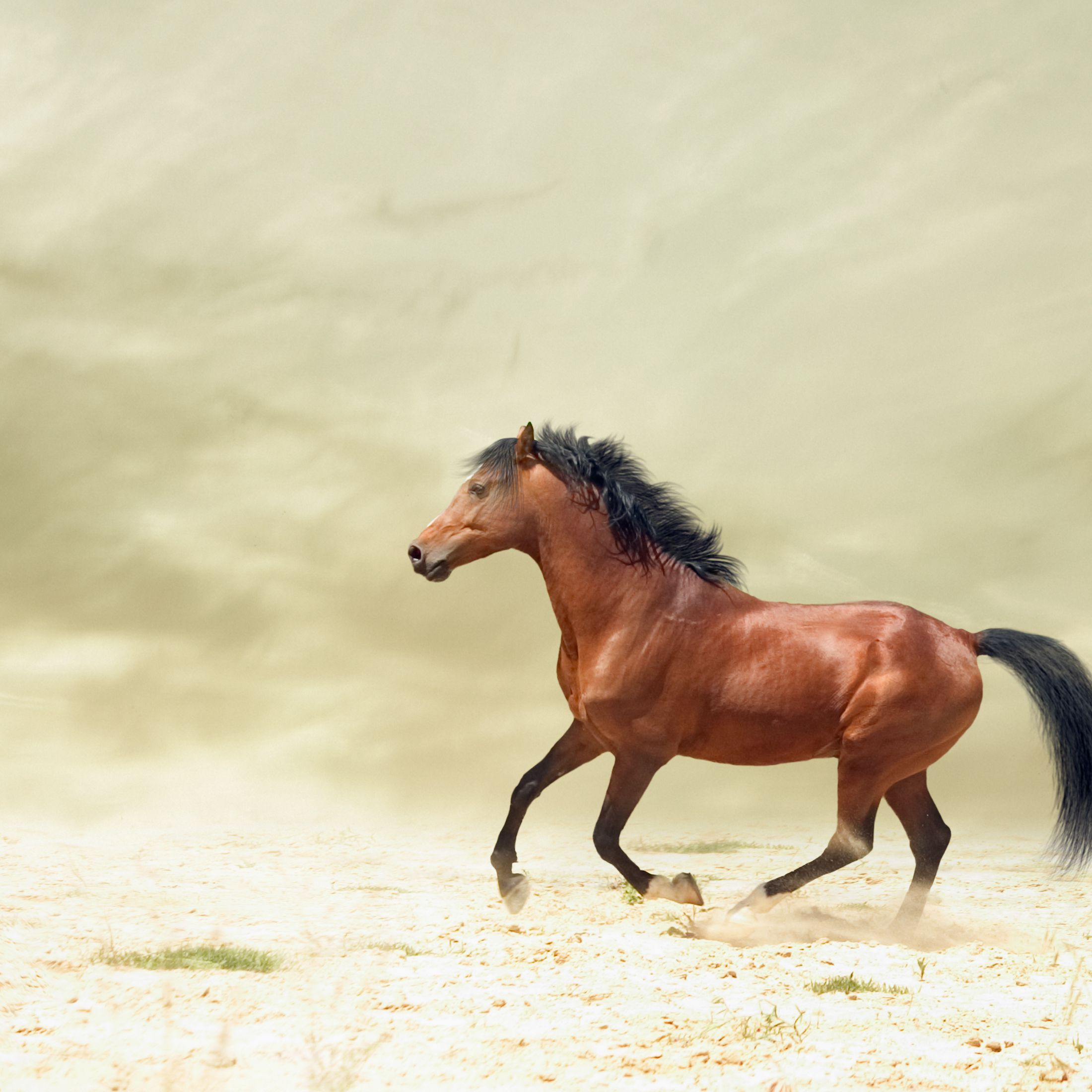 Famous Chinese Horse Proverb Sai Weng Lost His Horse