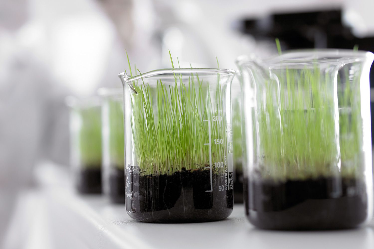 Using Plants in Science Experiments - List of Ideas