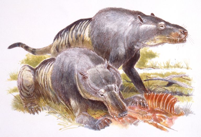 Artist rendering of the Andrewsarchus.