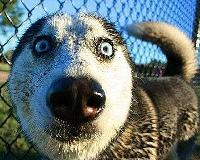 32 lol pictures of animals making funny faces animals making funny faces voltagebd Images