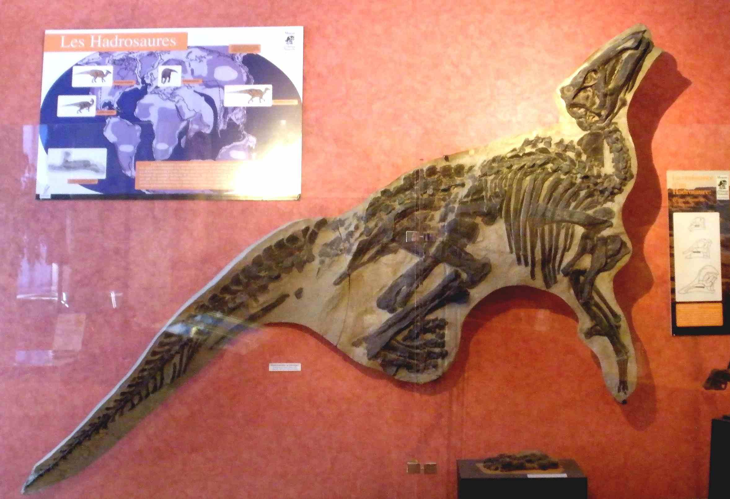 Fossil of Tethyshadros, an extinct ornithopod