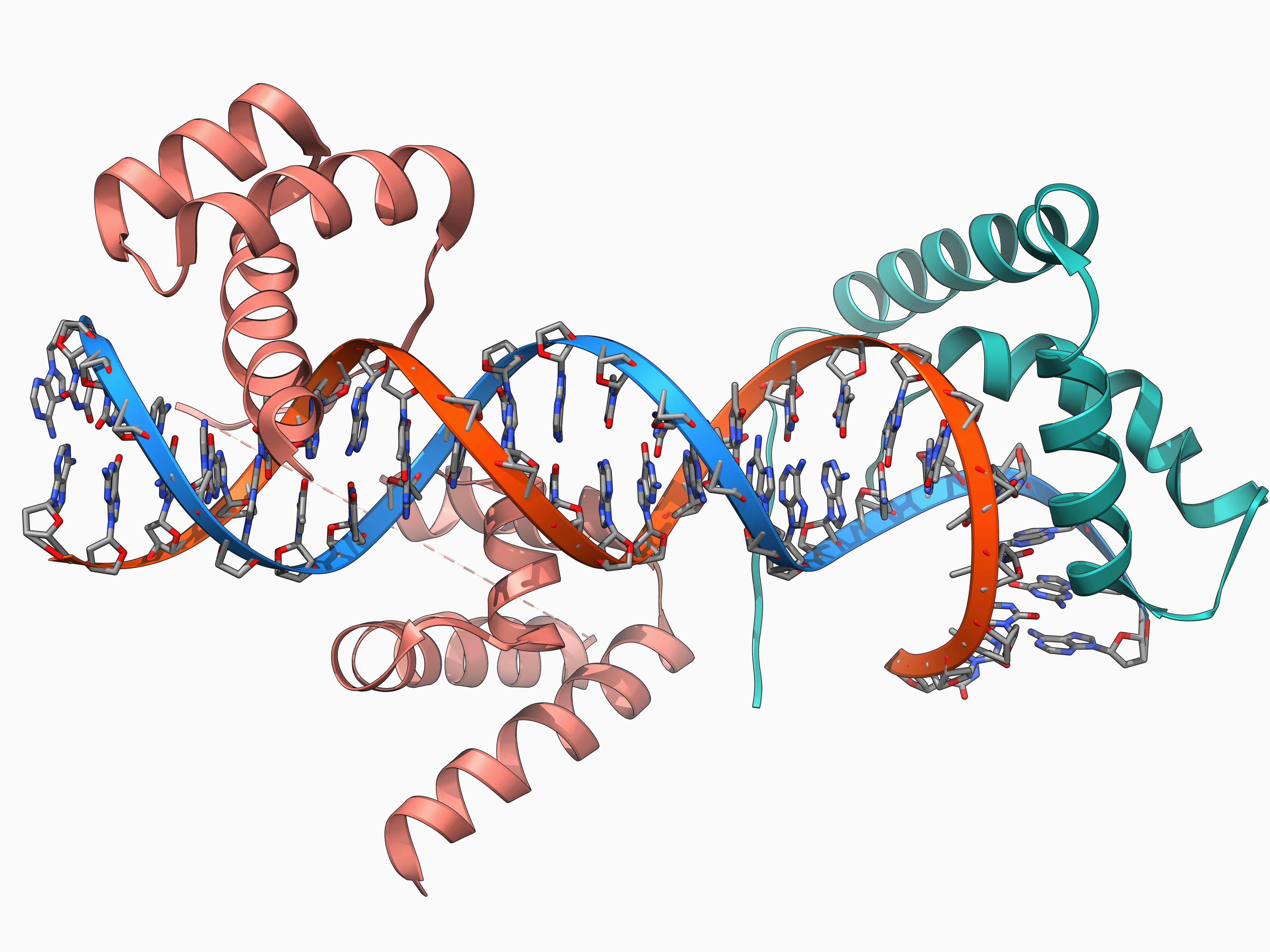 an introduction to dna transcription
