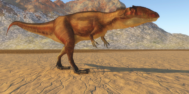 Carcharodontosaurus dinosaur in the Sahara region of Africa