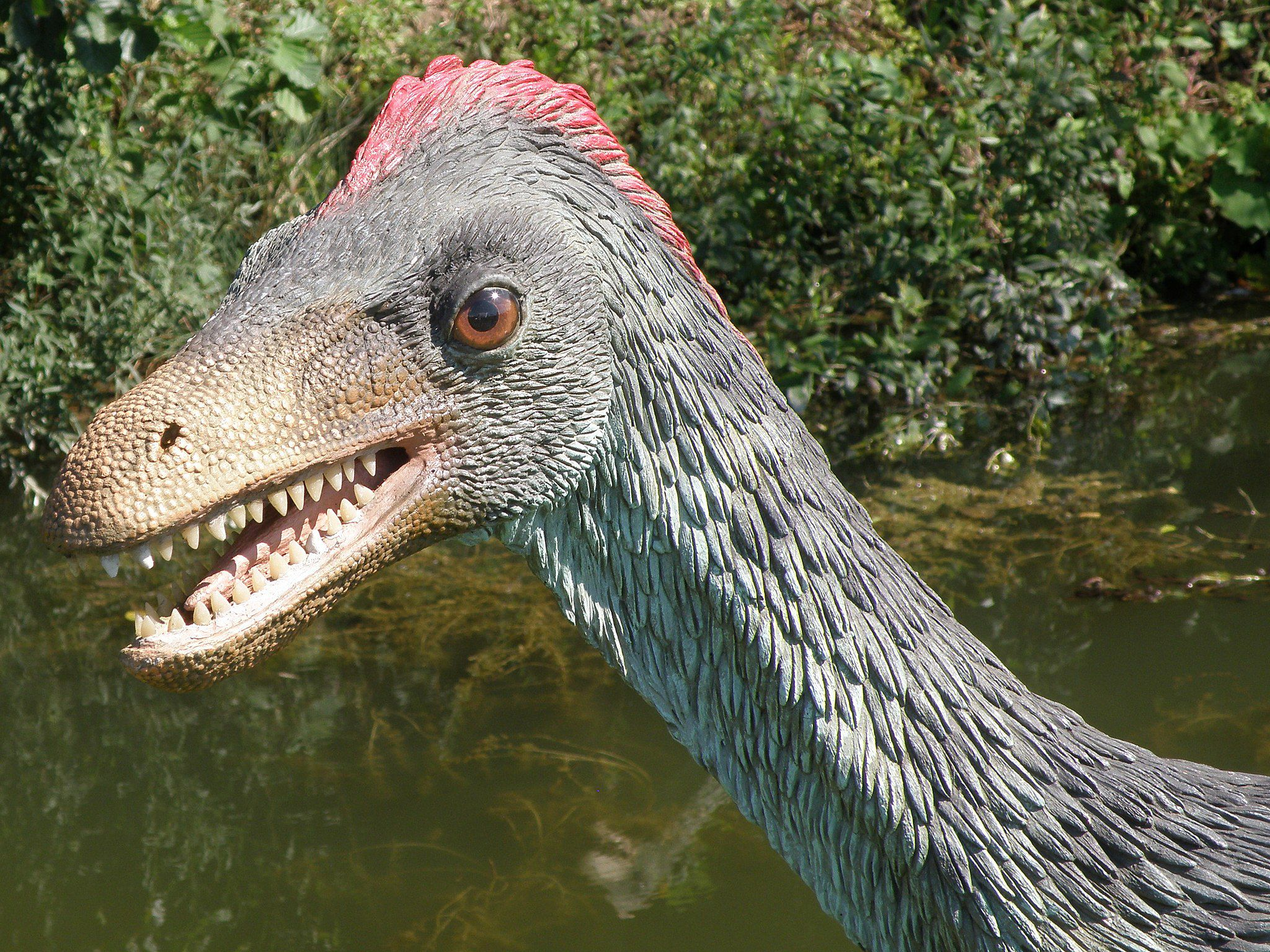 Model of a gray feathered <i>Troodon</i> with red comb on top of its head