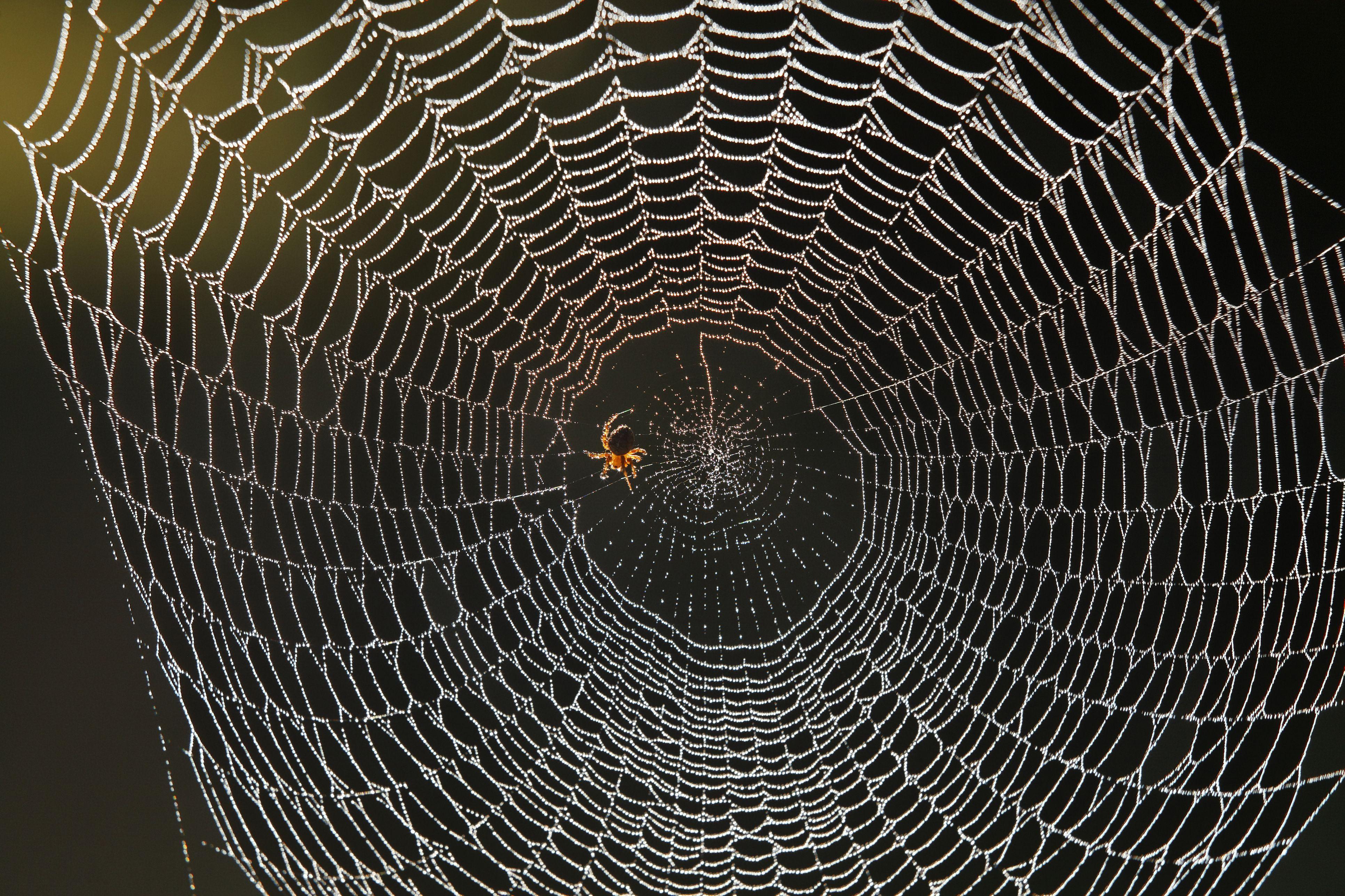 France, Vaucluse, Luberon, Spiber web dewy