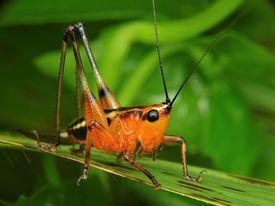 Close up of a grasshopper katydid sitting on a leaf.