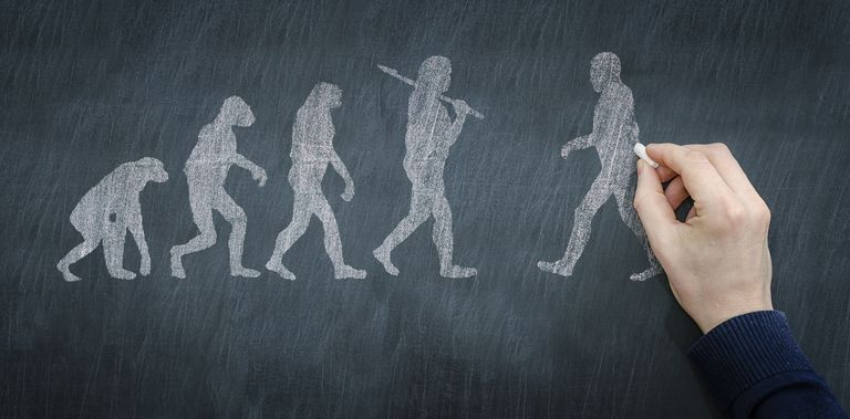 Chalkboard illustration of the progression of evolution.