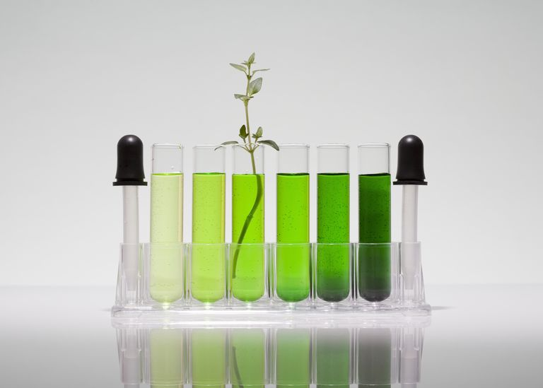 Test tubes filled with green liquid and a plant coming out of one. Representing green chemistry.