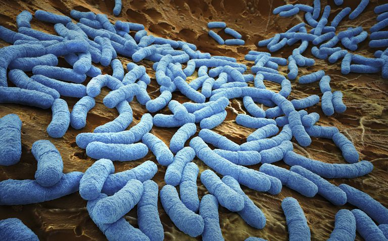 E.coli bacteria. Bacteria, like E. coli, can live for extended time on porous, damp surfaces.
