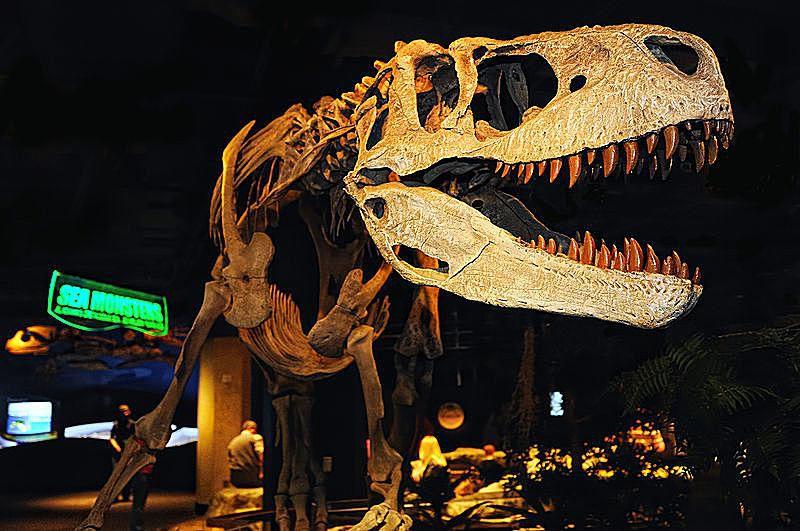 Appalachiosaurus skeleton