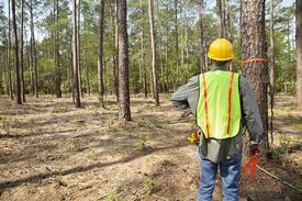 Forester or builder marking trees with ora...