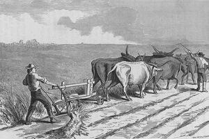Illustration of oxen ploughing a western prairie in the mid-19th century.