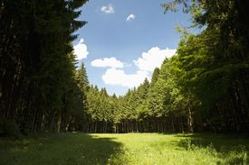 Forest and field