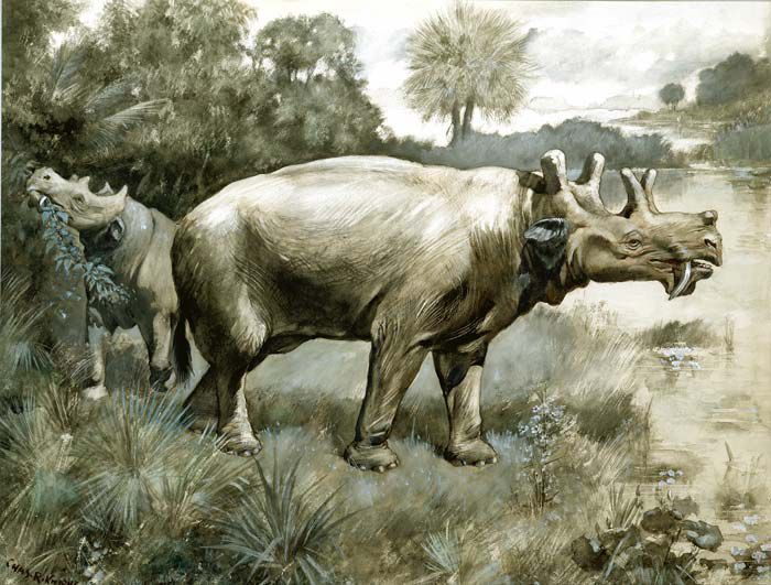 Image result for images of uintatherium