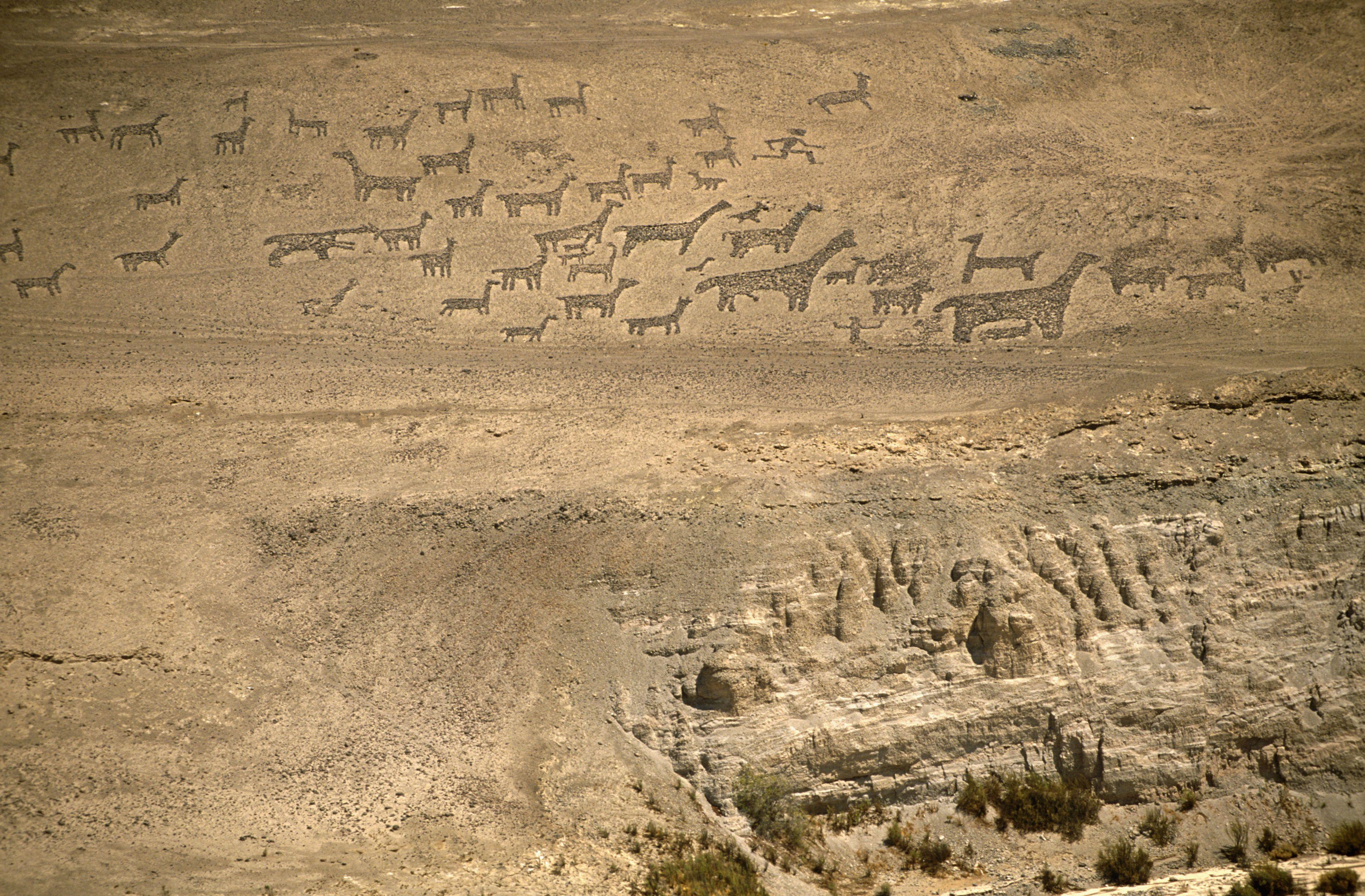 Chile, Region I, Tiliviche. Geoglyphs on a mountainside near Tiliviche, Northern Chile- representations of Llamas & Alpacas