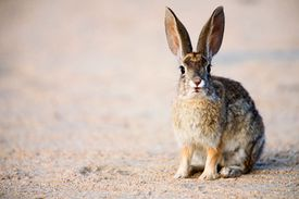hare on brown ground