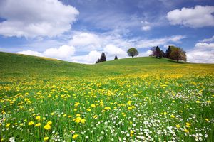A Bavarian meadow in Spring