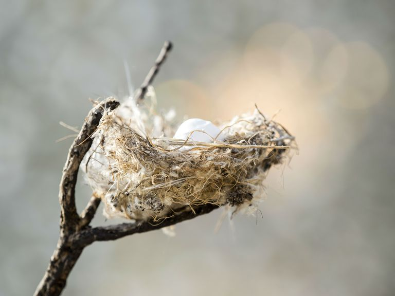 Bird Nest in a tree