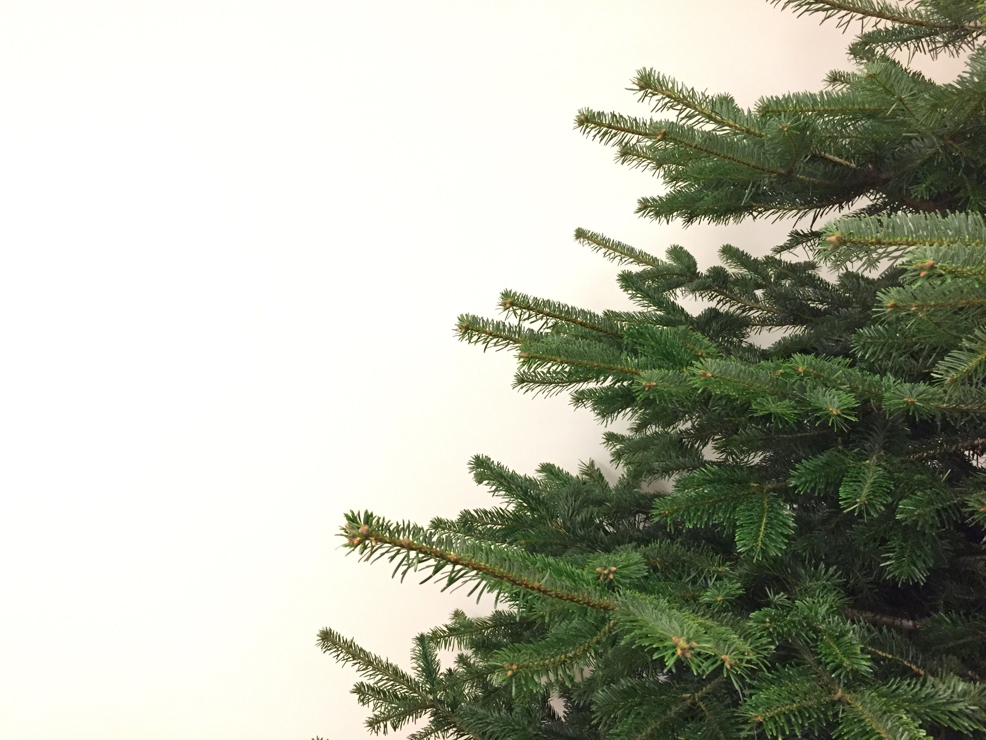 9 Steps for Displaying a Living Christmas Tree