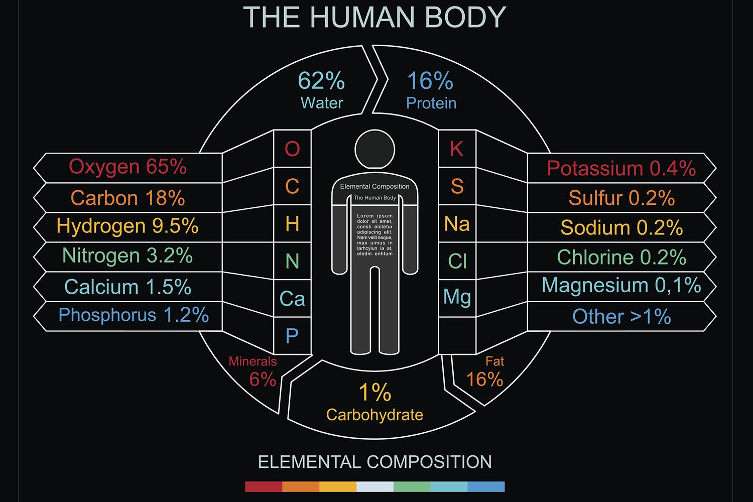 Elements in the human body and what they do urtaz Choice Image