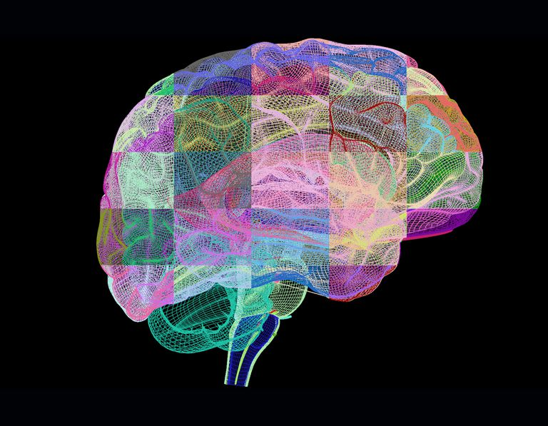 Computer artwork of human brain in profile