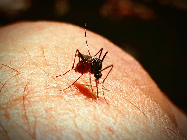 Close-Up Of Mosquito On Leg