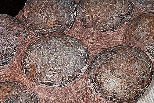 10 Facts About Dinosaur Eggs