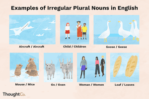 Examples of Irregular Plural Nouns in English
