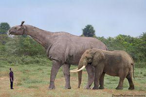 indricotherium