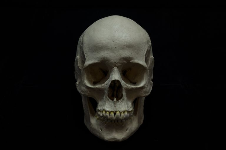 Studio Shot Of Human Skull