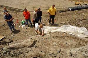 Paleotologists unearthing a prehistoric whale.