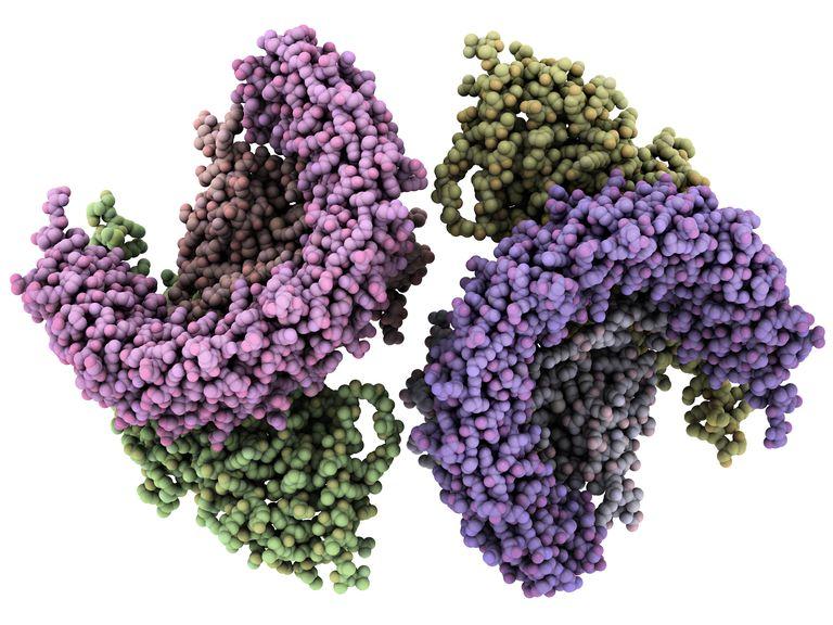 Human protein phosphatase